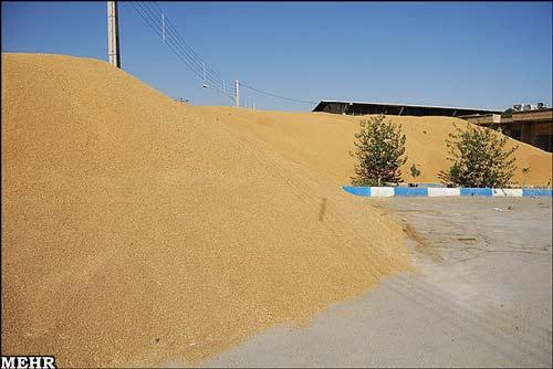 خرید گندم از سیلو