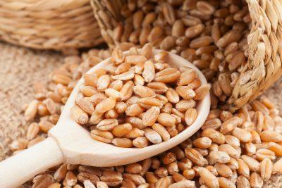 فروش گندم خوراکی
