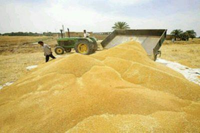 آرد دامی صادراتی