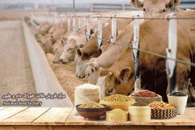 قیمت روز آرد دامی