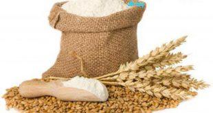 گندم جهت آرد و خوراک دام